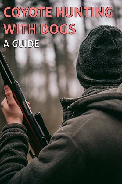 Coyote Hunting with Dogs - 5 Step Failproof Guide