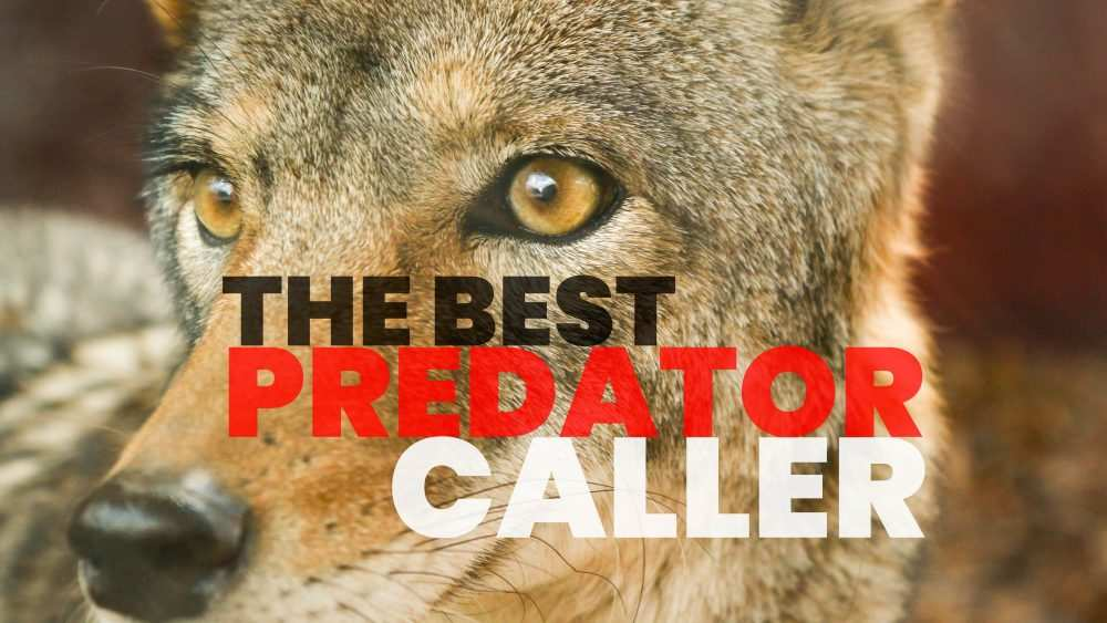 The Best Predator Caller for Actually Getting Results.